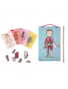 Le corps humain magnétique - L'Anatomie